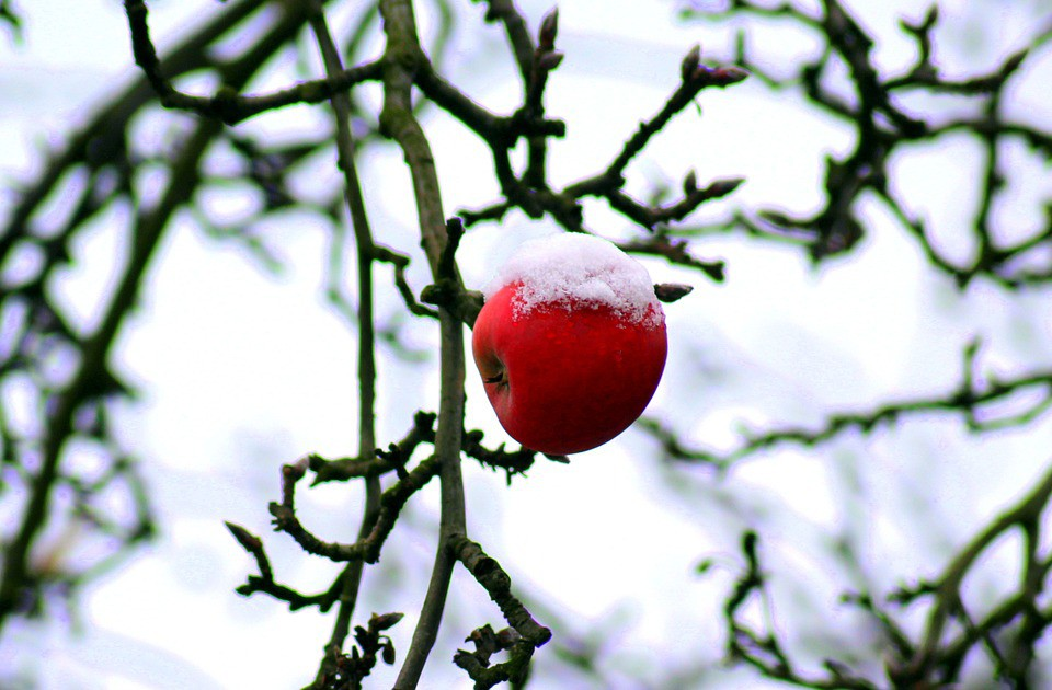 tree-3940609_960_720.jpg