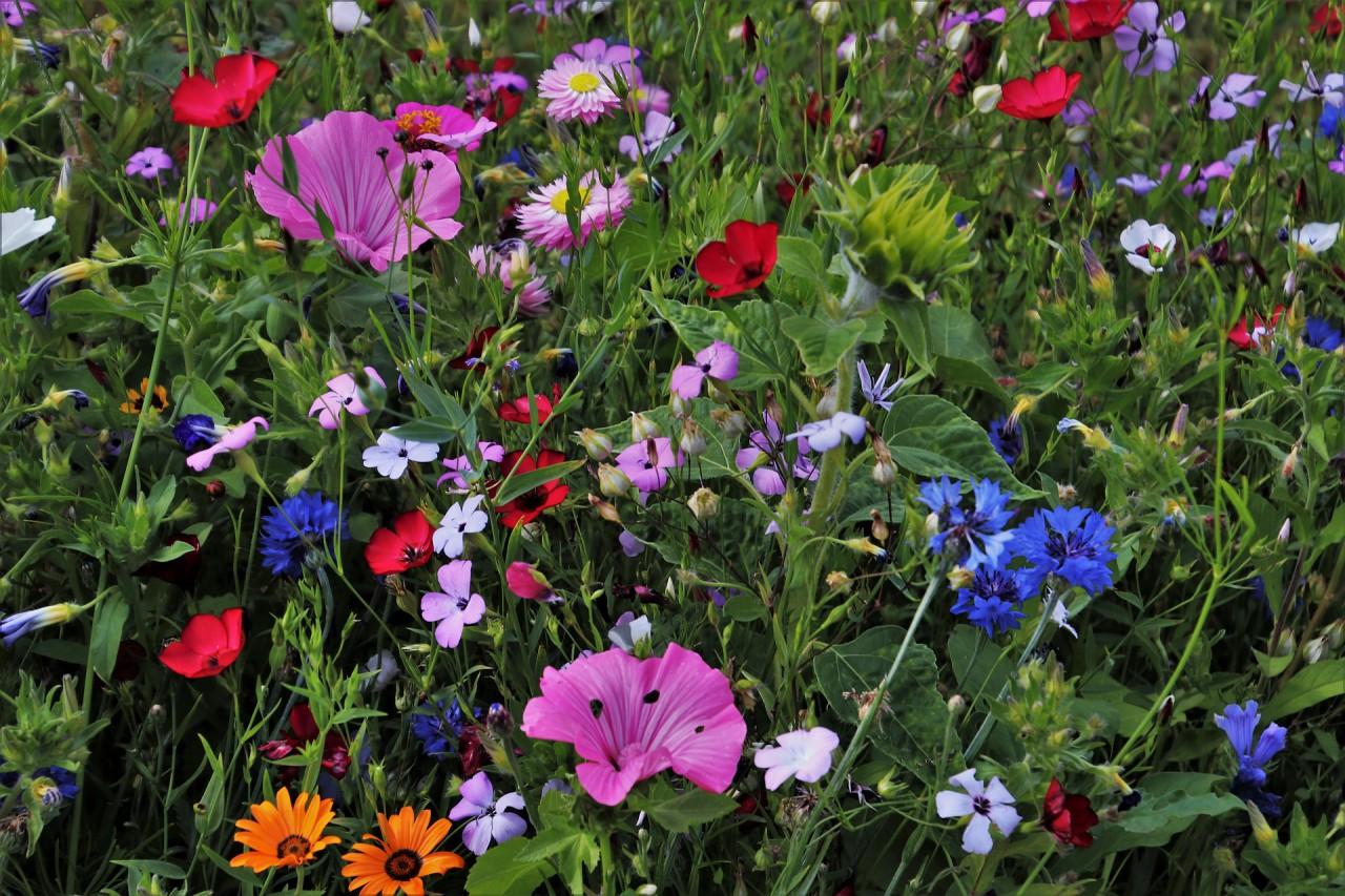 flowers-3524938_1920.jpg